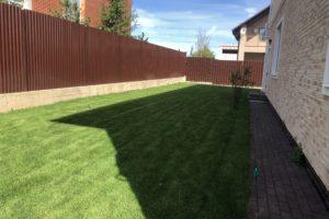 Газонная трава за домом
